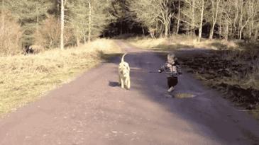 주인 산책시키기.
