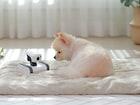반려동물을 위한 움직이는 IP 카메라 비교 사용기 (APPBOT RILEY vs 노리 스마트 RC카 CCTV)