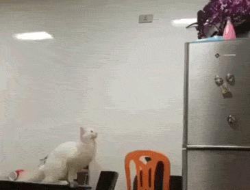 업데이트가 필요한 고양이..
