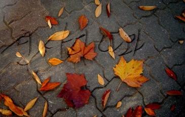 가을 하면 생각나는것