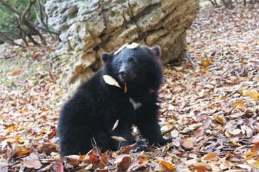 곰과 함께 산책을