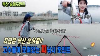 지금은 부산 숭어철!! 찌낚시로 누구나 쉽게 잡는 방법 공개~ 초보가 8마리나 잡음ㅋㅋ바다낚시 sea fishing aing2 [여자 낚시꾼 아잉2]