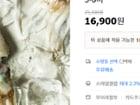 태안 자연산 통통 갑오징어 (대) 1kg / 3-6미