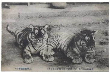 조선 시대의 반려동물