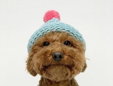 기다려 대회 1등한 강아지