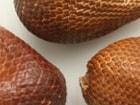 세상의 '별별 희한'한 과일 10종