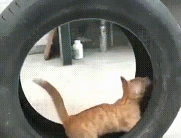 고양이 놀이기구