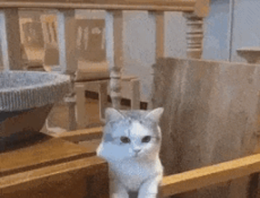 귀여운 고양이를 클로즈업해보았다
