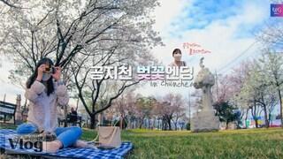 [Vlog] 공지천 벚꽃엔딩 # 이건 놓칠 수 없지 # 공강여행 브이로그 / 춘천 벚꽃놀이 / 꽃이 날 블러썸(blossom)