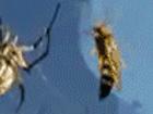 말벌 VS 거미