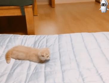 고양이 낚시