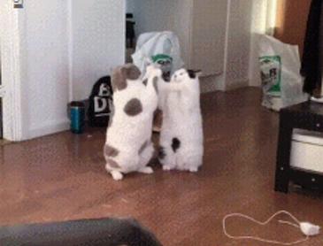 돼냥이들 싸움