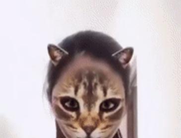 얼굴에 고양이 필터를 적용해보았다