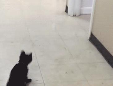 탁구공과 고양이