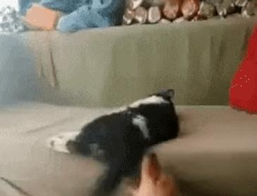 고양이 vs 강아지