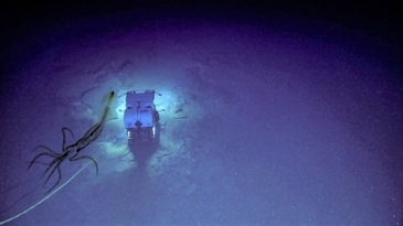 심해 탐사선이 포착한 희귀 대형 오징어