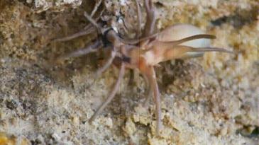 꼬리가 거미처럼 생긴 뱀