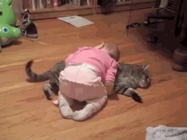 아기 재우는 고양이