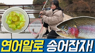 연어알로 송어잡자! Let's catch trout with salmon eggs!