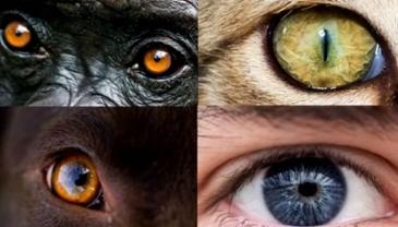 흰자가 많은 사람의 눈이 동물보다 생존율 높였다?