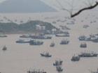 중국이 참치 맛에 눈뜨자, 남태평양 사모아 어부가 울었다