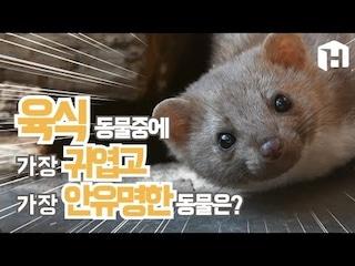 육식 동물 중에 가장 귀엽고 가장 안 유명한 동물은?쉐어하우스
