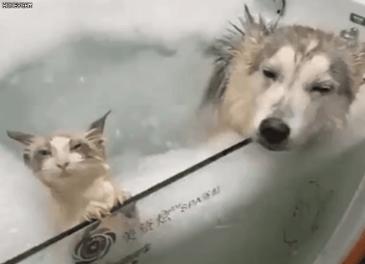 목욕하는 냥댕이