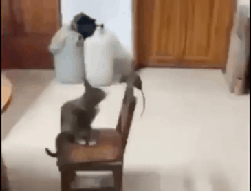 냥 vs 쥐