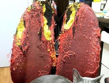 고양이 기르는 사람의 허파.jpg
