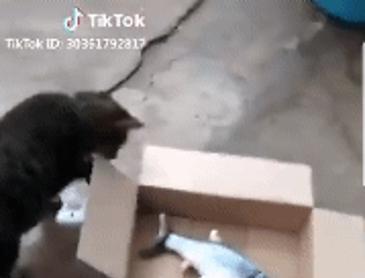 고양이 한테 생선 맡기기.gif