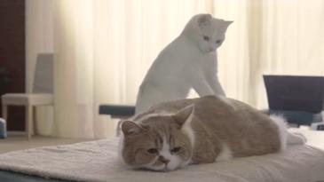 고양이 안마사