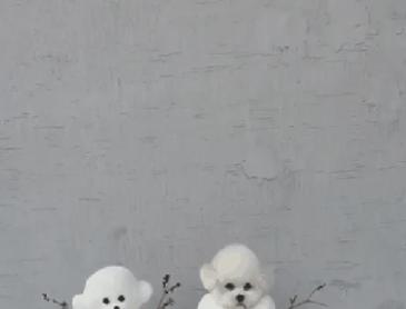 눈사람 커플