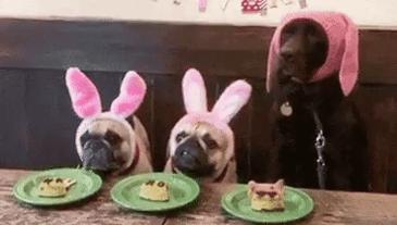 목이 짧아 불쌍한 강아지들
