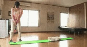 골프연습과 고양이