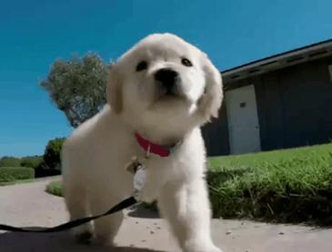 산책하는 댕댕이