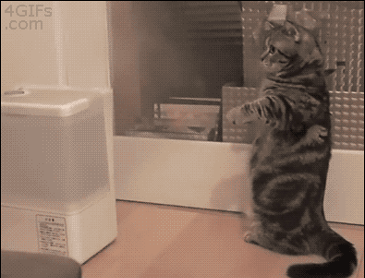 가습기가 신기한 고양이