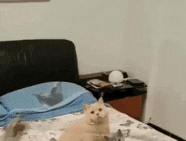 고양이 가족