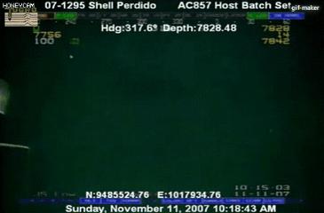 심해에 사는 8m 오징어