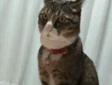 단호하게 거부하는 고양이