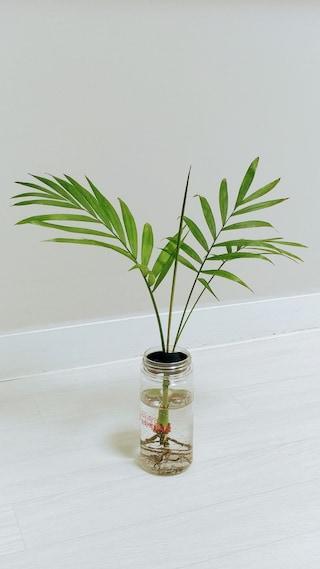 와이프가 받아온 식물