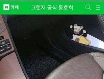 자동차 동호회 참사