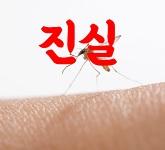모기에 관한 진실 거짓