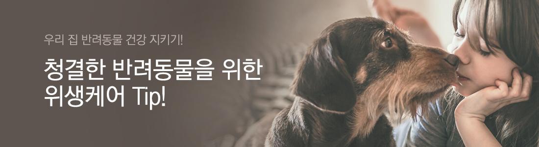 청결한 반려동물을 위한 위생케어 Tip!