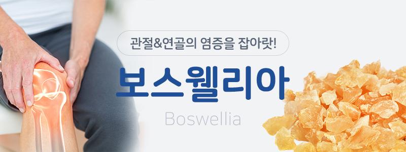 보스웰리아 관절, 연골의 염증을 잡아랏!