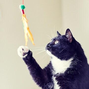 묘(猫)확행 고양이의 확실한 행복