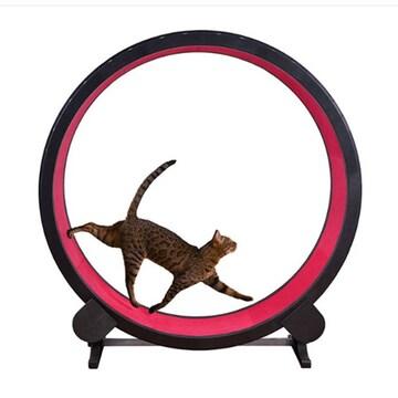 고양이 운동 바퀴 휠 라운드 운동기구