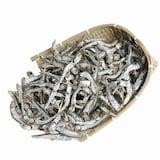 Dryfish24 통영산 햇 다시멸치 1.5kg  (1개)