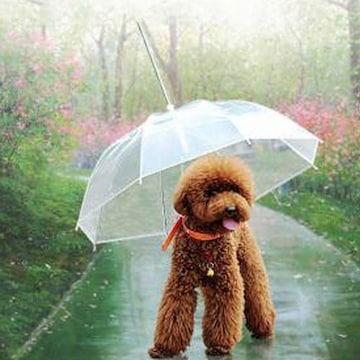 도그브렐라 강아지 산책 우산