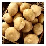 햇살조은 국내산 수미 감자 중 10kg (1개)