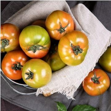베리팜영농조합법인 쥬스 & 쿠킹용 못난이 대저토마토 대과 2.5kg(1개)